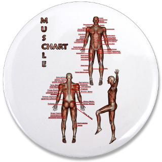 pack $ 165 49 muscle chart mini button $ 1 79 muscle chart mini button