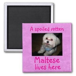 Spoiled Rotten Pet Lives Here Magnet   Girl