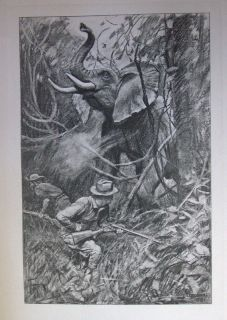 Theodore Roosevelt Hunting Book African Game Trails 1910 1st