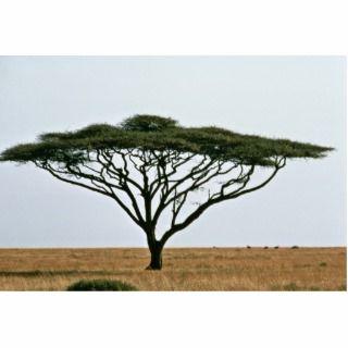 Umbrella Thorn Acacia Tree Cut Outs
