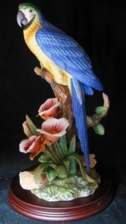 Andrea by Sadek Golden Blue Macaw Bird Sweet