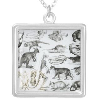 Marsupialia, Monetremata, Edentata Jewelry