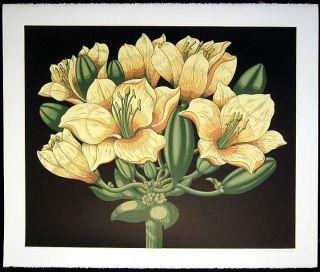 John Martineau Polyanthos Large Signed Numbered Artwork Serigraph of