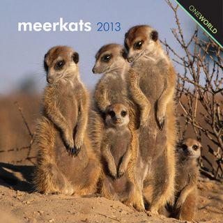 Meerkats 2013 Mini Wall Calendar