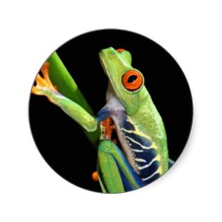 red eyed tree frog round sticker