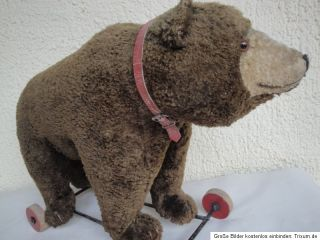 Steiff Brown Teddy Bear on Wheels 1940s w Growler Top RARE