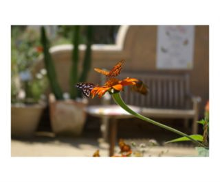 Butterfly Kisses 2 Photographic Print by Cara Bronstein