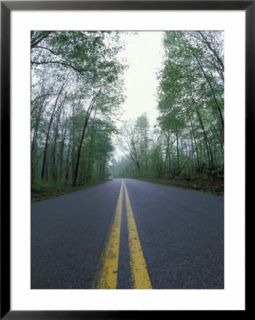 Forest Road in Spring, Daniel Boone National Forest, Kentucky, USA Pre made Frame