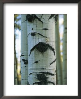 Detail of a Tree Trunk with Face Like Features Framed Photographic Print