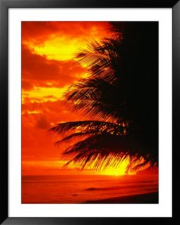 Palm Fronds Silhouetted by Sunset on the Coast, Corcovado National Park, Puntarenas, Costa Rica Pre made Frame