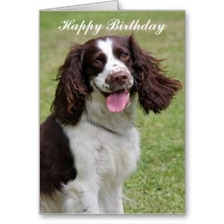 English Springer Spaniel dog happy birthday card