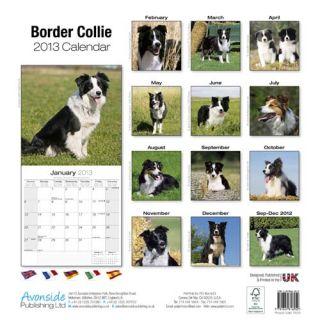 Border Collie Kalender 2013   Hochglanz   16 Monate gültig