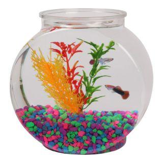 Bettas in bowls or small tanks my aquarium club autos post for Petsmart fish bowl