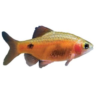 Pet fish tank freshwater tropical fish images frompo for Aggressive fish for sale