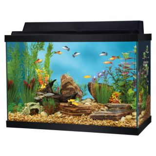 Top Fin� 20 Gallon Starter Kit   Sale   Fish