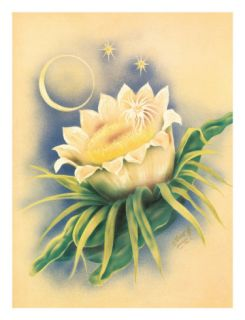 Hawaii Night Blooming Cereus, c. 1940s Giclee Print by Ted Mundorff