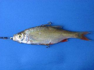 Raubfisch   System für Auftrieb , Grund . Schleppfischen und Pose