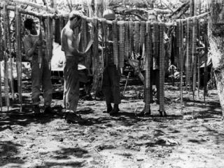 US Marines Hanging Machine Gun Ammo Belts Out to Dry on Guadalcanal Premium Photographic Print