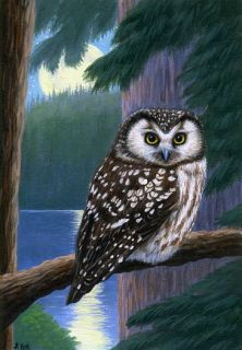 Boreal owl moon forest limited edition aceo print art