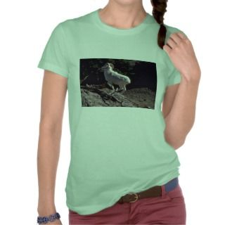 Dall sheep (Ram running acroos mountainside) T Shirts