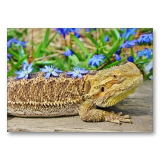 Relaxing Bearded Dragon Business Cards