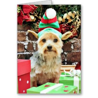 Christmas   Yorkie   Vinnie #32 Cards