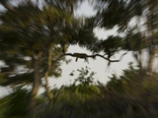 Leopard Resting High in a Tree Top Photographic Print by Beverly Joubert