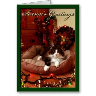 , Marry Christmas, christmas, cat Greeting Cards