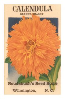 Calendula Seed Packet Posters
