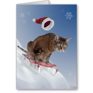 Cat Christmas Cards, Cat Christmas Card Designs
