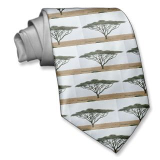 Tie / Umbrella Thorn Acacia Tree