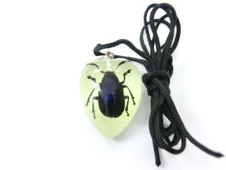 Insect Necklace  Blue Leaf Beetle Specimen (Heart Glow)