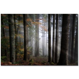 Philippe Sainte Laudy Light Forest Canvas Art