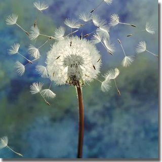 Gayle and Glen Wans Dandelion Canvas Art
