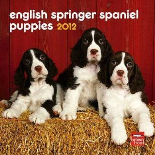English Springer Spaniel Puppies 2012 Small Wall Calendar